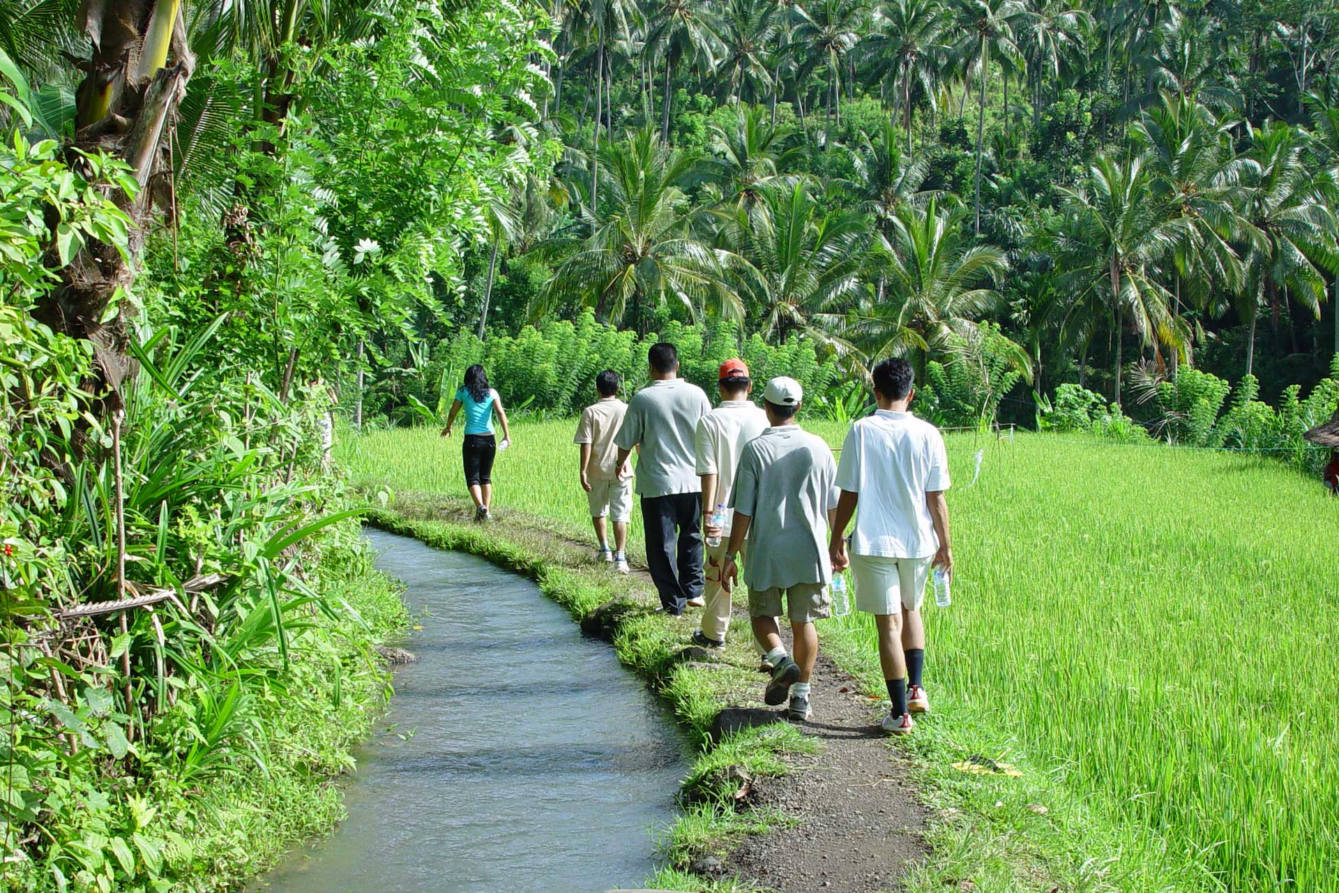 Group of tourists trekking next to a ricefield